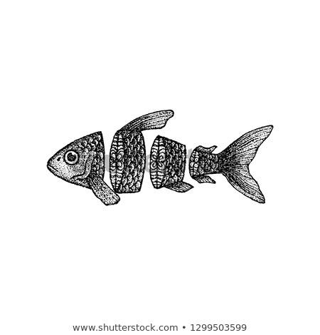 tonijn · schets · stijl · voedsel · hand - stockfoto © anna_leni