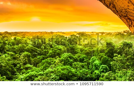 Red sunset in a rain forest Stock photo © galitskaya
