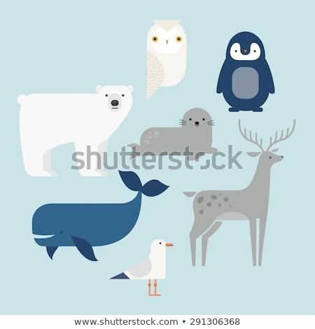 Wild walrus seal isolated animal cartoon Stock photo © cienpies