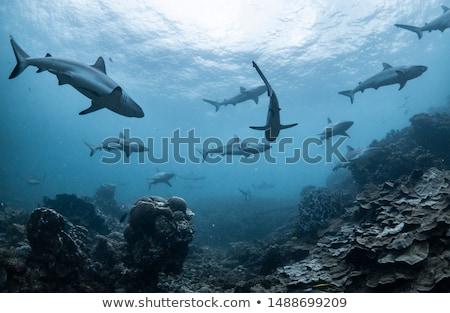 Cápa óceán illusztráció tengerpart tenger nyár Stock fotó © adrenalina