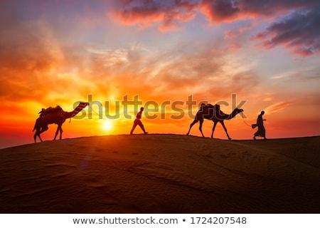 Hint deve sürücü siluetleri gün batımı Hindistan Stok fotoğraf © dmitry_rukhlenko