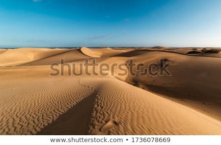 Duna naturalismo blue sky fundo deserto oceano Foto stock © smithore