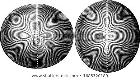 3d ilustracji komputera niebieski lustra cyfrowe refleksji Zdjęcia stock © Spectral