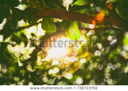 Folhas verdes luz solar primavera floresta natureza folha Foto stock © kawing921