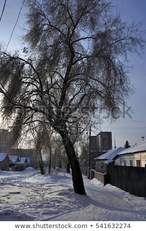 icy twigs and branches in snow against seasonal blue dawn Stock photo © morrbyte