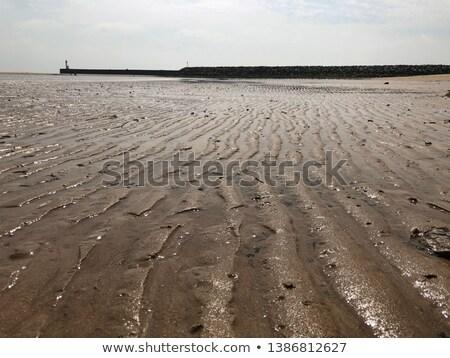 Salt lake at French Oleron island Stock photo © ivonnewierink
