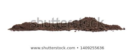 Plant in a mound of soil Stock photo © boroda