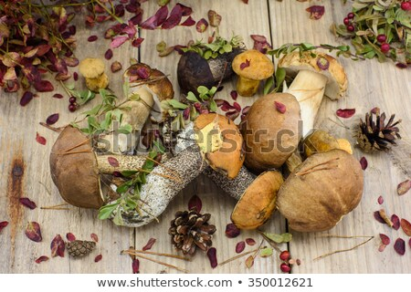 dry cowberries stock photo © foka