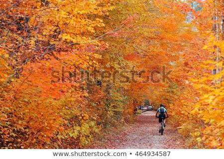 Vermont · cair · cenário · montanha · topo · ver - foto stock © gophoto