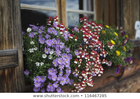 Colorful Flower Arragement on the windows of an Alpine Cabin in Austria Stock photo © Geribody