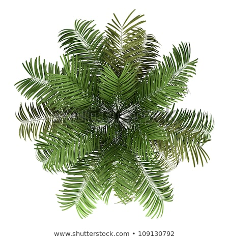 top of subtropical tree Stock photo © mycola