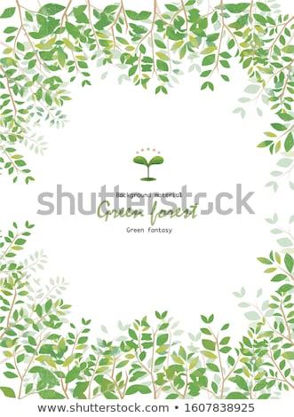Fresco novo folhas verdes árvore primavera madeira Foto stock © almir1968