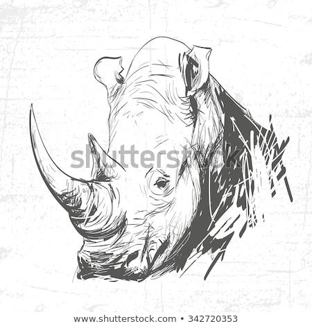 rajz · orrszarvú · nagy · szem - stock fotó © kali