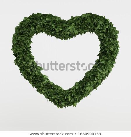 Bluszcz serca pozostawia rozwój czerwony liści Zdjęcia stock © Jumbo2010