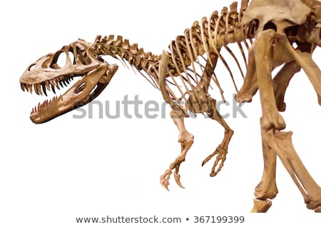 skeleton of a large lizard  Stock photo © OleksandrO