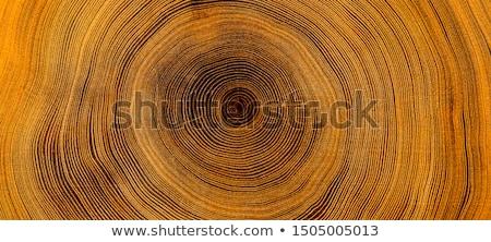 Fa részleg éves gyűrűk gyűrű halott Stock fotó © meinzahn