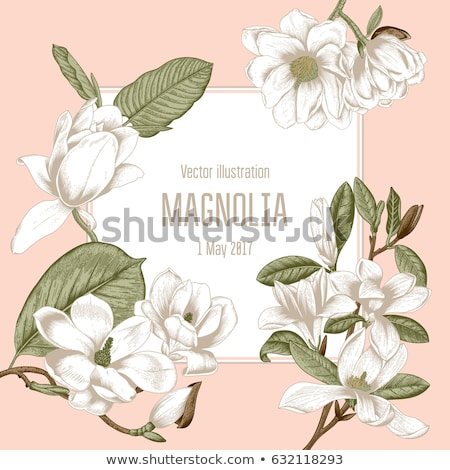 Bloei witte magnolia vintage stijl collage Stockfoto © brebca
