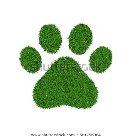 Dog Grass Footprint Stock photo © make