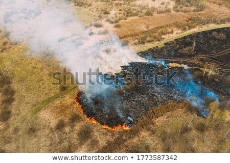 yakacak · odun · kömür · parti · doğa - stok fotoğraf © undy