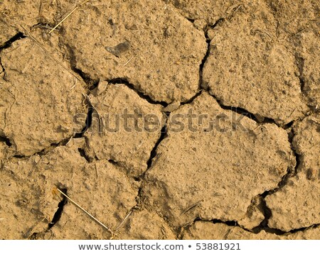 Parched and Cracked Dry Ground in Full Sunlight Stock photo © Frankljr