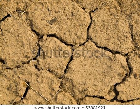 repedt · száraz · föld · tele · napfény · sötét - stock fotó © Frankljr