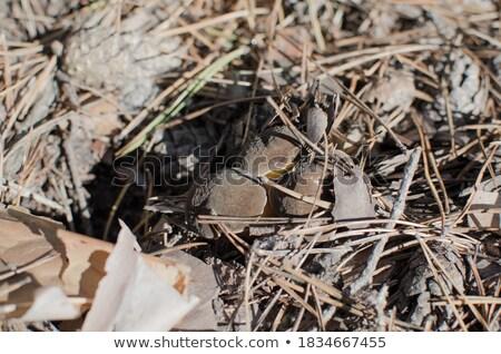 grzyb · piękna · lasu · grzyby · mech · drewna - zdjęcia stock © romvo