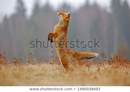 Wildlife animals scene Stock photo © bluering