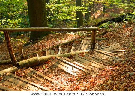 Autumn in Denmark Stock photo © bdspn