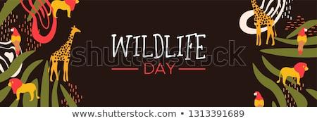 живая природа день Safari веб баннер жираф Сток-фото © cienpies