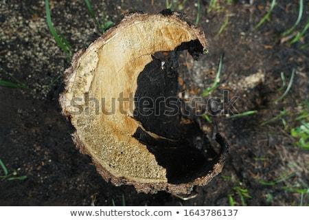 Fa erdő futótűz kilátás szerencsétlenség természet Stock fotó © xbrchx