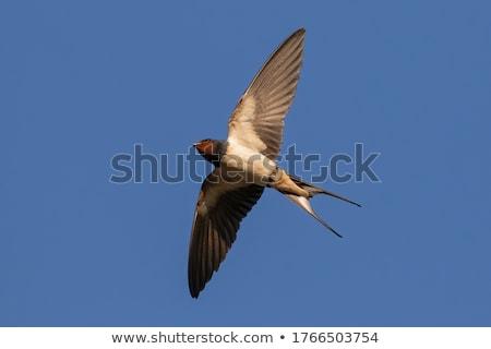 небе весны заседание природы синий птиц Сток-фото © Bananna