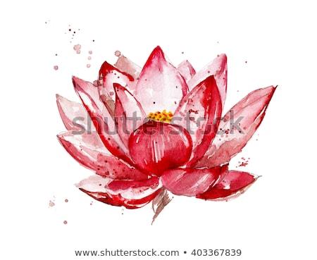 Decorative Watercolor lotus flower illustration.  Stock photo © Margolana