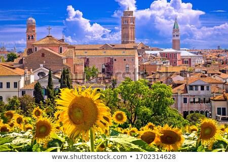 Skyline Крыши Венеция мнение подсолнечника терраса Сток-фото © xbrchx