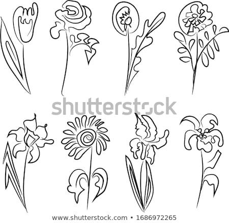 Buket nergis iris çiçekler klasik mavi Stok fotoğraf © neirfy