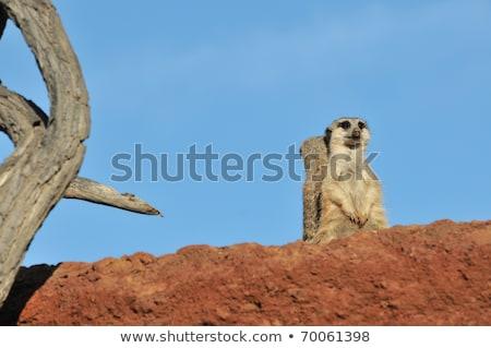 ver · rocha · animal · africano - foto stock © CraigPJ