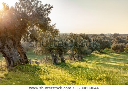 Landscape of  alentejo field. Stock photo © inaquim