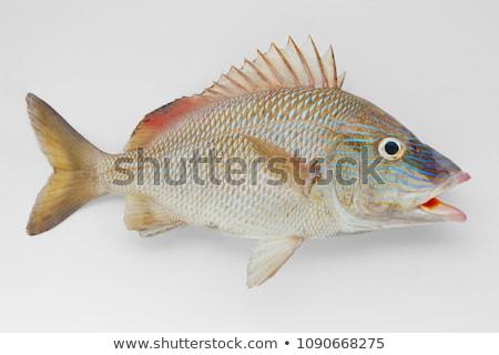 魚 · スイミング · 水 · 海 · 美 - ストックフォト © Laracca
