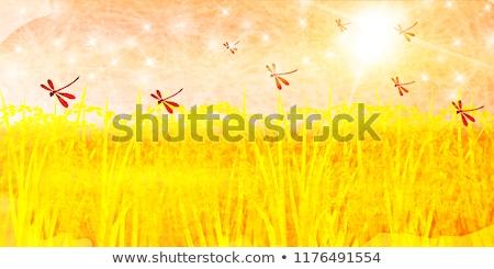 szitakötő · kert · zöld · természet · gyönyörű · rovar - stock fotó © yoshiyayo