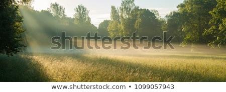 ışık alan çim yaz gün çiçek Stok fotoğraf © ryhor