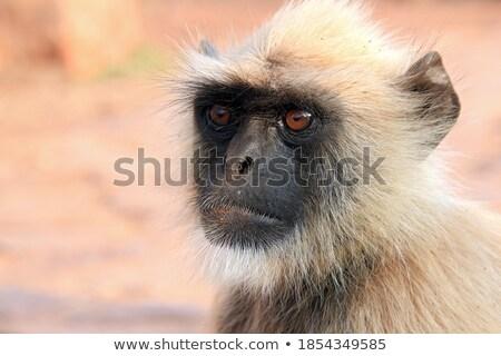 Indiai közelkép arc domb oldal portré Stock fotó © calvste