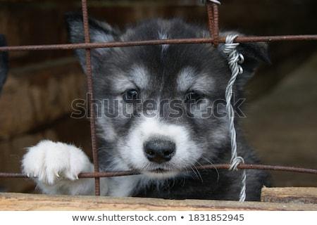 kutyák · ketrec · szomorú · néz · másik · kutya - stock fotó © ivonnewierink
