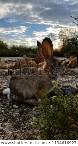 Rabbit is looking for the  eggs in labyrinth Stock photo © jelen80