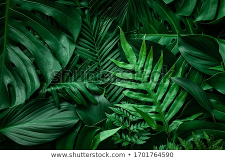 foliage stock photo © mtkang