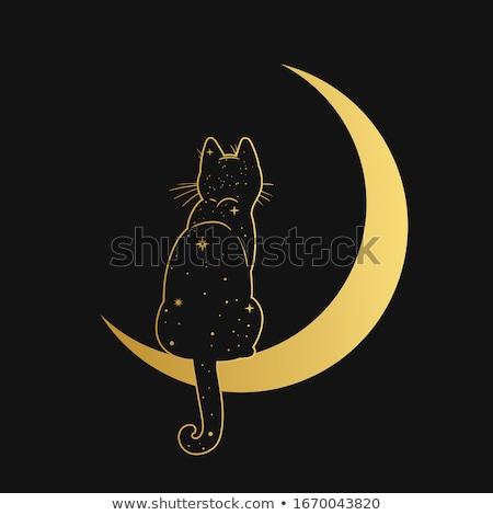 Macska hold fény éjszaka sikoly fekete Stock fotó © emirsimsek