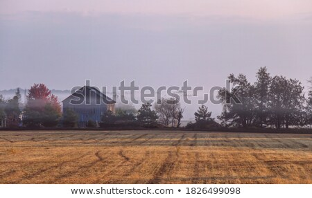 Old weathered barn on a foggy autumn morning Stock photo © DonLand