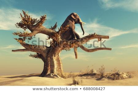 Freedom concept tree Stock photo © cienpies