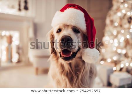 Perrito Navidad sombrero jugando Foto stock © taden