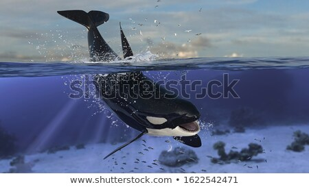 Szenzáció víz alkotóelem terv boldog sport Stock fotó © Toltek