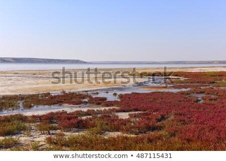 Rood zout zwembad achterbuurt zee zomer Stockfoto © jkraft5