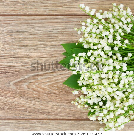lilly of the valley  blooming posy Stock photo © neirfy